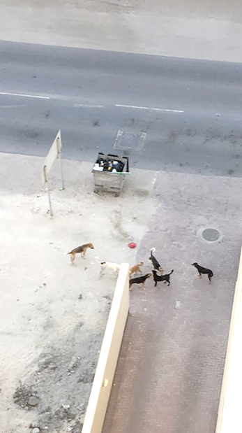 Dogs menace