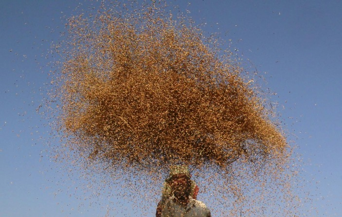 World food price index rises in June, first increase in 2020: UN