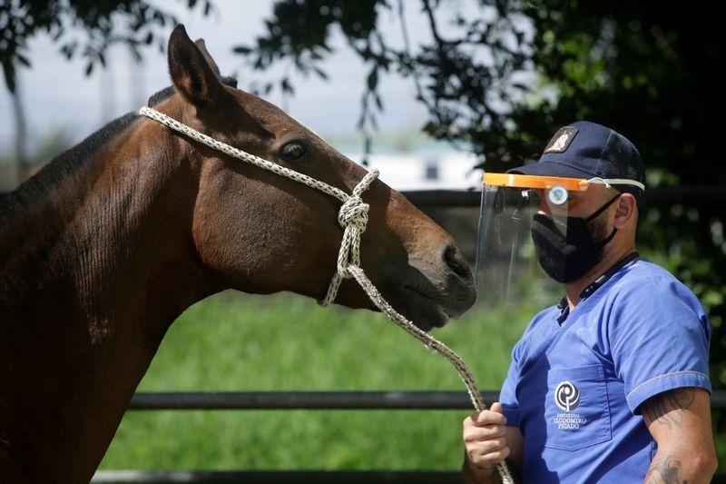 Costa Rica researchers to trial coronavirus treatment from horse antibodies
