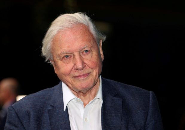The joy of birdsong graces David Attenborough's lockdown