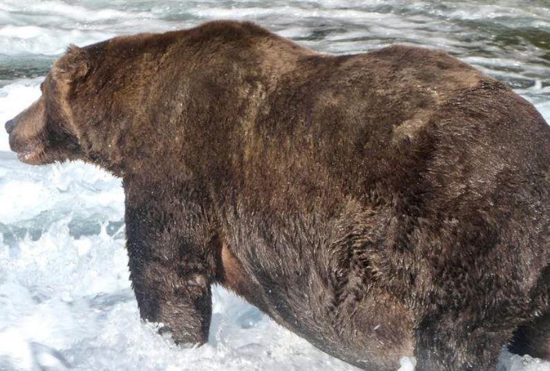 Wide-bodied 747 crowned Alaska's fattest bear