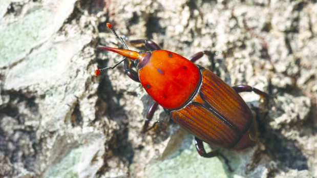 Bahrain News: Hi-tech help to fight killer date palm pest